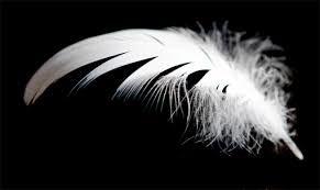 White Feather