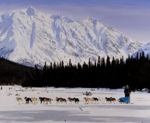 """Iditarod"" by Rose Albert"