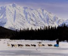 """Iditarod"" by Rose Albert"